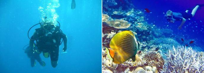 Dykning i Phuket
